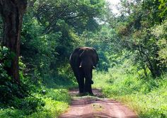 Sighting by Africa: Live App User www.facebook.com/... #animals