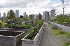 A sustainable food system is essential to nourishing a healthy city. The City of Vancouver, Canada launched its Food Strategy in January 2013, the culmination of 10+ years of policy, planning and c...