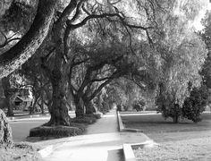 Marengo Avenue in Pasadena, circa (Bizarre Los Angeles) Pasadena California, Southern California, San Gabriel Mountains, Front Royal, Carmel Valley, California History, City Of Angels, Vintage Hollywood, Santa Monica