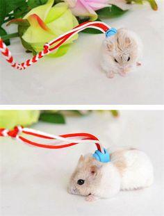 Adjustable Ferret Harness/Baby Rabbit/Hamster Rat Mouse Leash Lead Rope C986   eBay