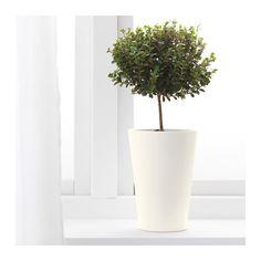 PAPAJA Plant pot, white 4 ¾x7 ½