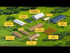 Presentation of the Complex for broiler meat production Chicken Cages, Chicken Feed, Diy Chicken Coop, Poultry Breeds, Poultry Farming, Poultry Business, Single Storey House Plans, Muscovy Duck, Poultry House