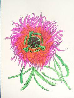 Passiflora anon