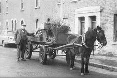 harry   Strafford St   Isle of Dogs Heritage & History Vintage London, Old London, East London, Horse Cart, Richest Man, Tower Hamlets, Irish Catholic, Isle Of Dogs, London History