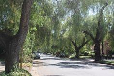 California 'street tree' benefits valued at $1 billion