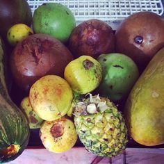 Frutos sembrados en el patio de la casa. Zapallo, badea, borojó, piña y guayaba agria. Una estrategia para disfrutar y conservar la tradición.