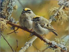 Carl Brenders - Crowning Glory - Golden-Crowned Kinglets - Search Gallery One for Brenders limited edition prints, giclee canvases and original paintings by internationally-known artists