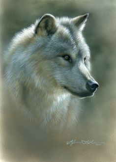 Gray Ghost - Wolf