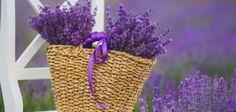 Levandulová inspirace: Provoňte si domov kouzelnou květinou z Provence | BydlímeKvalitně.cz