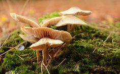 5 Surprising Health Benefits of Mushrooms