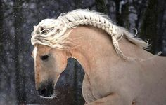 Beautiful braided horse mane