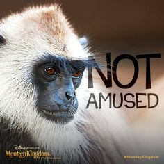 Don't try your antics on this guy. Happy April Fools Day! #MonkeyKingdom