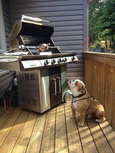 """❤ """"I know that's for ME"""" ❤ #englishbulldog #pet"""