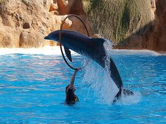 Dolphin - Tenerife Loro Parque.