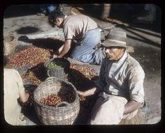 Sorting coffee by t13hman, via Flickr