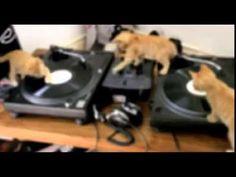 DJ kitties