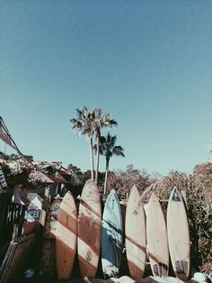 Imagem de summer, beach, and surf