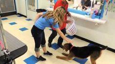 Severe Food Obsession -  Best Dog Trainer in Michigan - Dog Whisperer BIG CHUCK MCBRIDE Change Bad Dog Behavior in 30 Min or it's Free 248.974.3031
