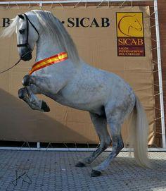 Fer Gallardo. Campeón del mundo de movilidad. Subcampeon SICAB 2015