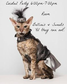Coco, the Couture Cat: Caturday Saturday, #WigglebuttsUncorked Style! Pet Fashion, Cat Walk, Kitty Cats, Fundraising, Couture, Pets, Animals, Style, Swag