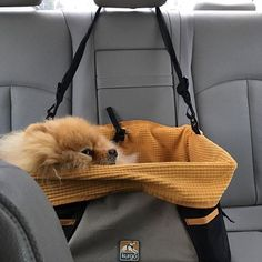 Cozy, safe, and comfortable....dog booster seats make travel so much better for both the dog and their owner! Photo by @ziggylillover