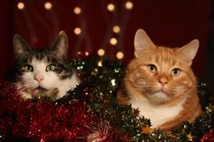 From us all to you all a Merry Christmas and a Happy New Year! // Nina and cats Merry Christmas Christmas Cats, Merry Christmas, Cat Love, Animals, Deviantart, Sign, Google, Merry Little Christmas, Animales