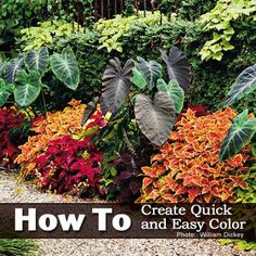 How To Create Quick and Easy Color Without Flowers