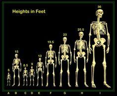 """Para quem nunca ouviu falar, os Nefilins são gigantes que co-habitaram a Terra nos tempos passados. Eu falo co-habitaram, pois eles eram exceções, pois se diferenciavam dos outros """"homens comuns"""" que viveram nessa mesma época."""