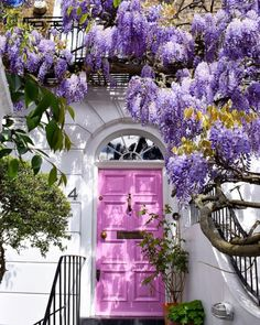 Love the color of the door and the blooming vine together.