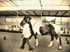 Egvus: My home equestrian club   Equestrian from Crete