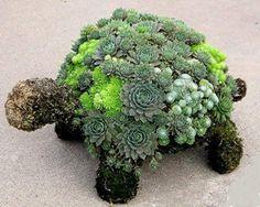 Tortuga topiario creada con suculentas - Love this for my Garden! Succulent Turtle Topiary created with Succulents
