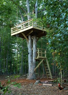 diy treehouse  | 10×12 tree deck about 20 feet up on a large triple-trunk white oak.