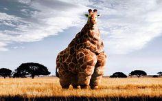 giraffe image for mac computers by Tyreece Turner (2016-07-28)