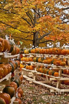 Pumpkin Festival -- Maybe carve pumpkins and hand out candy for Halloween?