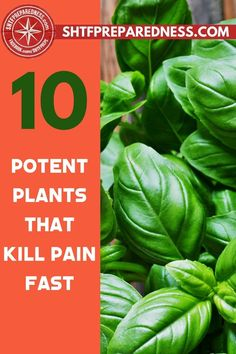 Our society relies on pills for many things that ail us, including pain relief. SHTFPreparedness advises that you stock up on the plants that kill pain fast. Because once things are shut down and going to the doctor for a prescription is a thing of the past you don't want to be stuck without a backup. That is where we come in.  We have a list of 10 potent plants that are fast pain relievers. Check this out now and be prepared. Download the report… #painfree #plantskillpain #naturalpainrelief Natural Cures, Natural Health, Health And Wellness, Health Tips, Best Money Saving Tips, Wound Care, Natural Pain Relief, Great Life, Useful Life Hacks