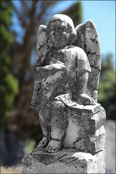 Cemetery   Franschhoek   Copyright of ©TheFirstChild Photograph Garden Sculpture, Lion Sculpture, Cape Town, Cemetery, Statue, City, Outdoor Decor, Photography, Travel