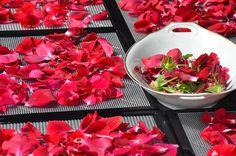 Wie liefde zegt zegt rozenblaadjes. Misschien kunnen we op het einde van de voorstelling rozenblaadjes laten vallen van het plafond op het podium, eventueel tijdens het applaus.
