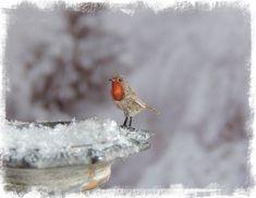 Robin Redbreast by AnyaStone on DeviantArt