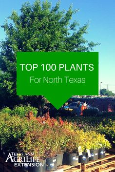 Live in North Texas? Here's a list of the Top 100 Plants for North Texas compiled by the  AgriLife Dallas Water University.