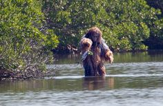Skunk Ape of the Southern United States Yeti Sightings, Bigfoot Sightings, Real Bigfoot, Bigfoot Photos, Greek Mythological Creatures, Pie Grande, Legendary Monsters, Creepy, Mermaid Drawings