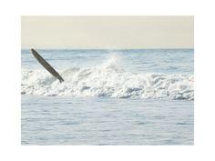 """Wipeout, Venice Beach"" - Photography Limited Edition Art Print by Annie Seaton. Venice Beach, Beach Photography, Fine Art Photography, Custom Art, White Beige, Beach Art, Cerulean, Canvas Frame, Home Art"