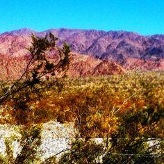"""Southern California Desert"""