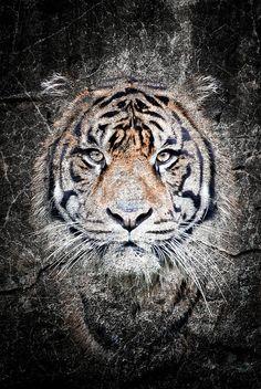 Wildlife art. Tiger on stone.