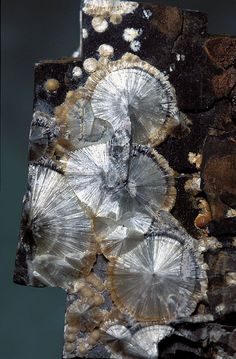Wavellite / High Down Quarry, UK #minerals #rocks #crystal