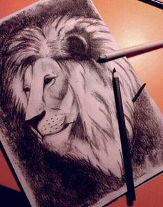Prova di leone a carboncino