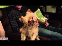 Dog Discovers Camera