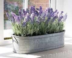 lavender in galvanized tub!
