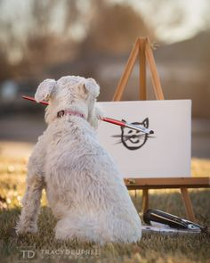 Life with Izzy the miniature schnauzer. A dog painting a cat.