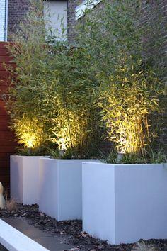Bloembakken met bamboe: moderne Tuin door Guy Wolfs Hoveniersbedrijf