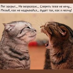 ☆Цитаты.Мысли.Шутки☆ (@izbrannoye) | Твиттер Animals And Pets, Funny Animals, Russian Humor, Clever Quotes, Funny Quotes About Life, Cat Tattoo, Funny Animal Pictures, Man Humor, Your Best Friend
